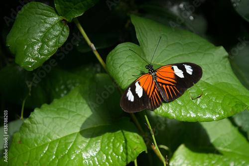 motyl, motyle, owady, kwiaty, rośliny, drzewa, przyroda