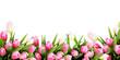 Pink tulip flowers border - 138798865