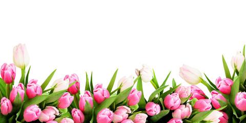 Pink tulip flowers border