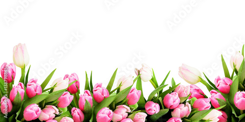 Pink tulip flowers border Poster