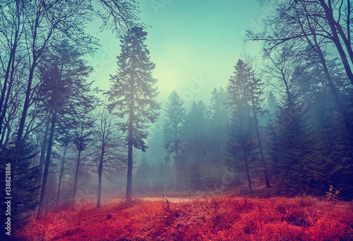 Magic dark forest. Autumn forest scenery with rays of warm light. Mistic forest. Beskid Mountains. Poland © alekosa