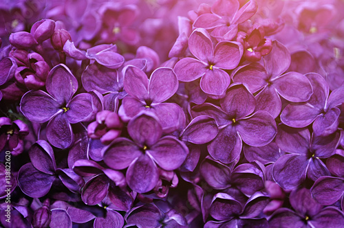 Fotobehang Snoeien Lilac flowers, spring floral background
