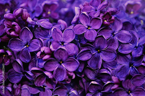 Canvas Snoeien Lilac flowers, spring floral background
