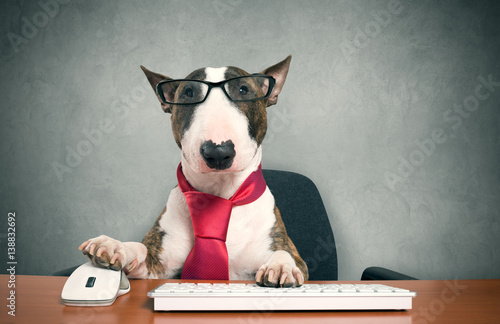 Business dog Poster