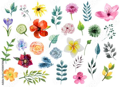 Fototapeta Watercolor floral elements set