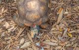 Schildkröte in Ansicht von oben