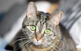 Portrait of a brown female cat staring with bright green eyes - 138886076