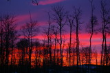 Sunrise with pink and purple clouds and silhouette of trees