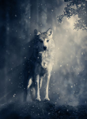 Fantasy wolf in the forest
