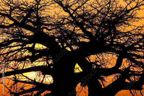 Deurstickers Baobab Sunset Baobab