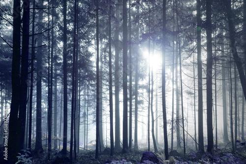 Fantazja zmrok - błękitny mgłowy lasowego drzewa krajobraz.