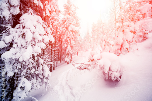 Foto op Canvas Wit Fantastic wintry landscape