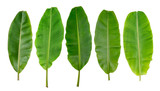 collection of banana leaf isolated on white background - 138926859