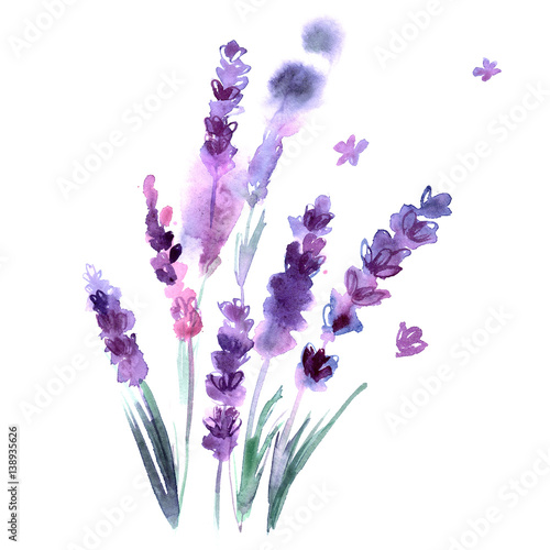 Watercolor hand painted lavender flowers on white background. Invitation. Wedding card. Birthday card. - 138935626
