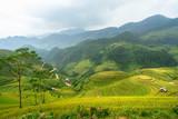 Rice fields on terraced of Mu Cang Chai, YenBai, Rice fields prepare the harvest at Northwest Vietnam. Vietnam landscapes.