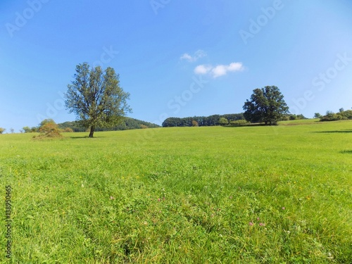 Meadow and deciduous forest in wild nature