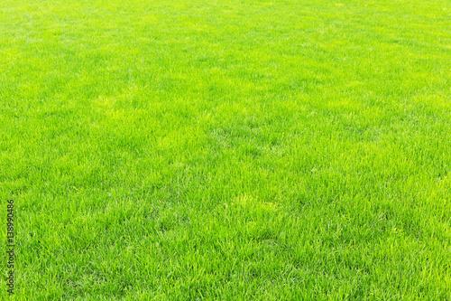 Rasen mit neuem grünem Gras