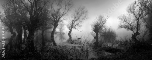 Papiers peints Photos panoramiques Spooky landscape showing silhouettes of trees in the swamp on misty autumn day