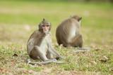 Monkeys sitting and eating