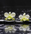 still life with black stones and two orchid