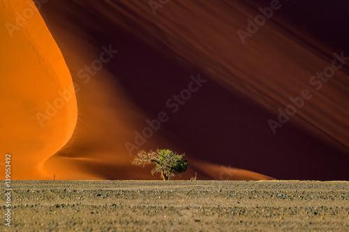 In de dag Oranje eclat Dune 40 and trees at sunrise, Sossusvlei, Namib Naukluft National Park, Namibia