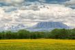 Field with honey aroma, Kamchatka