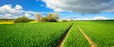 Landschaft im Frühling, grünes Feld, Traktorspur - 139088686