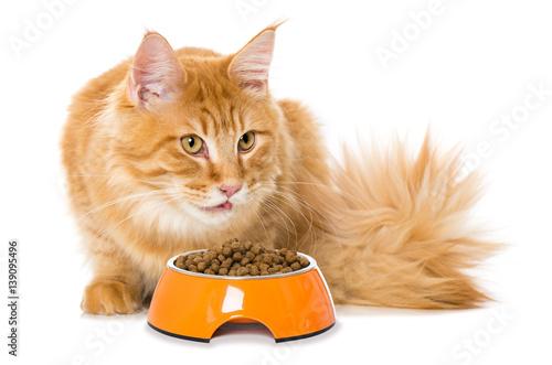 Fototapeta Katze mit Futterschüssel