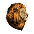 lion proud, face in profile, looking into the distance, sketch, vector, color image, mane of red hair