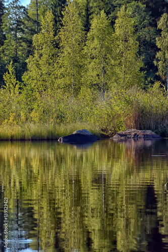 Tuinposter Bos rivier Forest near the water and reflection.