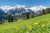 Frühling in der Natur