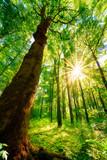 Wald im Frühling bei Sonnenschein - 139153062