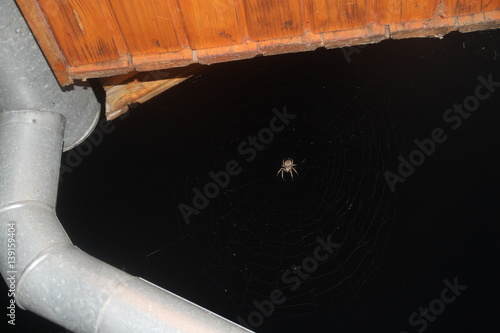 Big Spider Poster