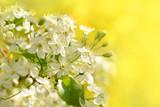 Frühling 316