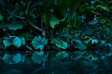 tropical rain forest with water mirror - 139214229