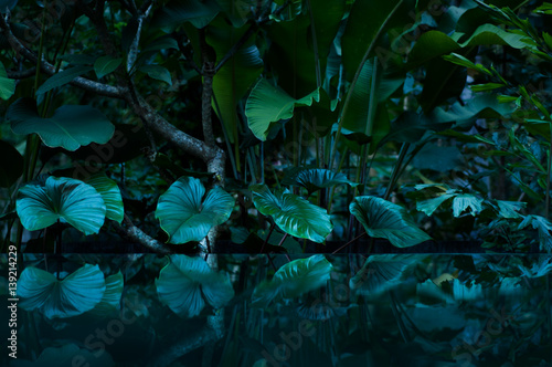 Fototapeta tropical rain forest with water mirror