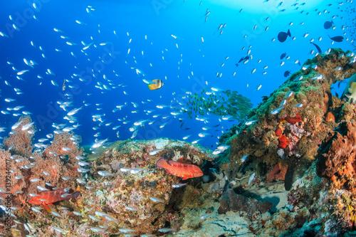 Fotobehang Koraalriffen Glassfish swarm around a coral pinnacle in the Komodo national park