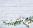 Natural still life with eucalyptus branches and cotton flowers, top view