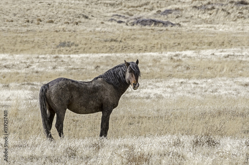 Poster Wild Horse