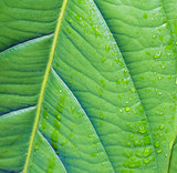 Closeup view of green leaf in Jasper Canyon - Gran Sabana, Venezuela, Latin America