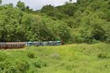 Petit train dans la jungle