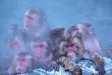 密集して入浴する猿の視線
