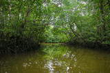 Peaceful waters of the Mangrove Forest Tour