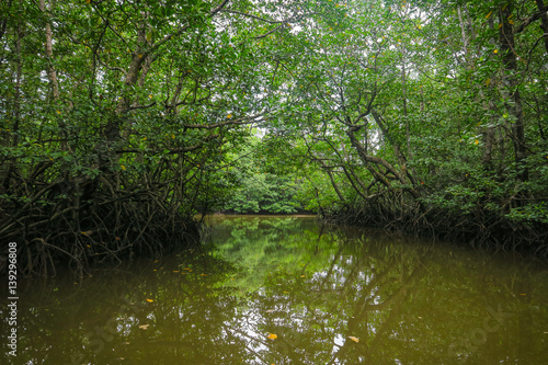 Fotobehang Betoverde Bos Peaceful waters of the Mangrove Forest Tour