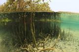Split image of Mangrove tree - 139330825