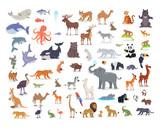 Big Set of World Animal Species Cartoon Vectors