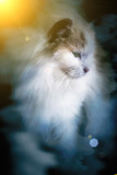 abstract cat in cloud soft and blur