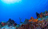 Coral reefs that lie in the tropical caribbean sea are marine habitats for a diverse ecosystem. the warm blue water makes the perfect environment for this natural beauty