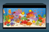 Marine reef saltwater aquarium with fish and corals