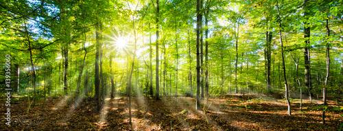 Grünes Wald Panorama im Sonnenschein